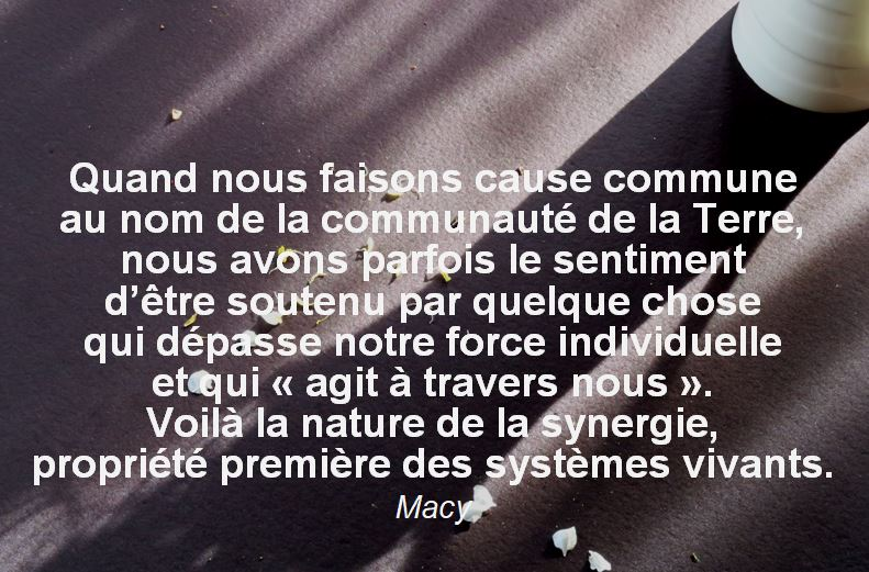 Capture Macy systmes vivants